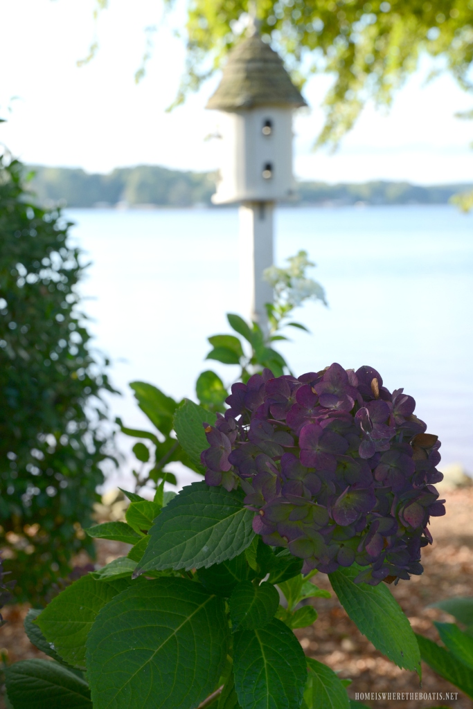 Fall color Endless Summer Hydrangeas | ©homeiswheretheboatis.net #flowers #hydrangeas #lake