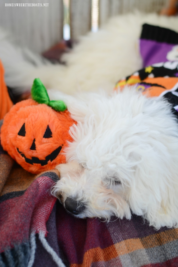 Dogs on the Porch | ©homeiswheretheboatis.net #Halloween #dogs #porch #bichonfrise