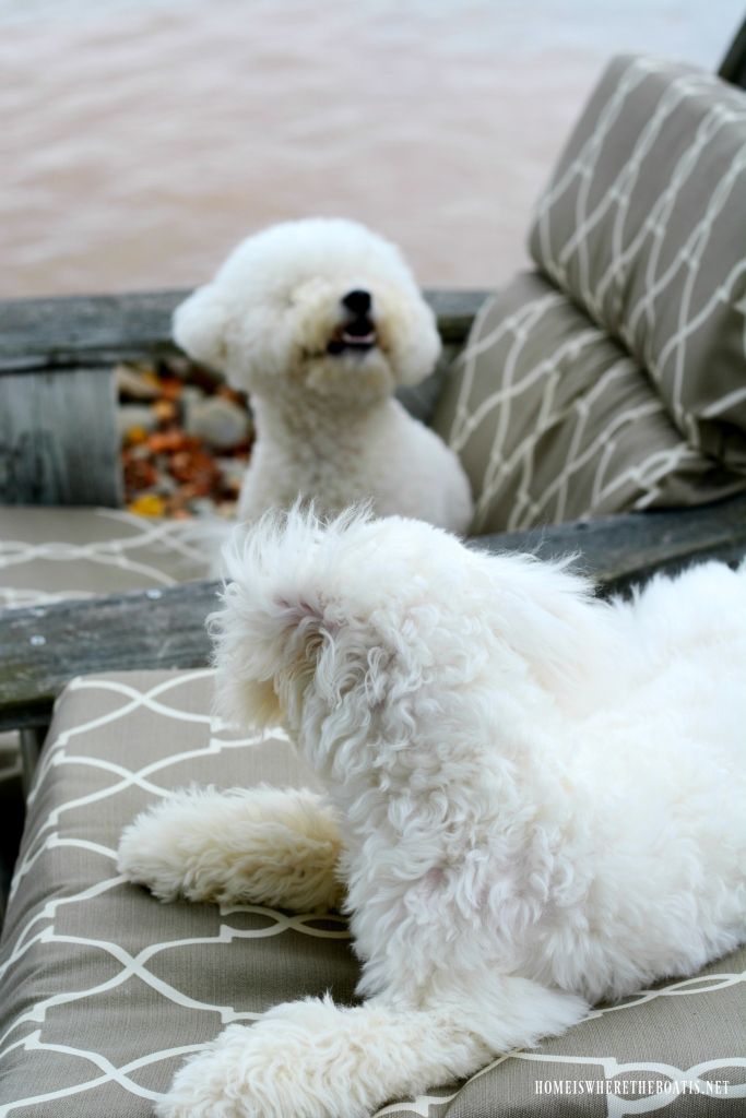 Weekend Waterview Chair Sitting with Dogs | ©homeiswheretheboatis.net #dogs #lake #LKN #bichonfrise