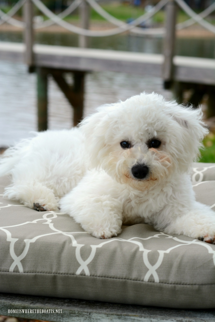 Weekend Waterview Chair Sitting with Dogs   ©homeiswheretheboatis.net #dogs #lake #LKN #bichonfrise