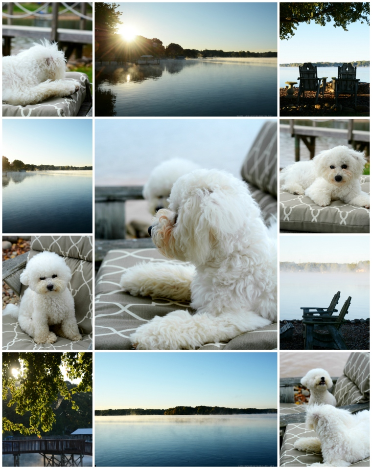 Weekend Waterview: Steam Fog and Chair Sitting with Dogs | ©homeiswheretheboatis.net #dogs #lake #LKN #bichonfrise