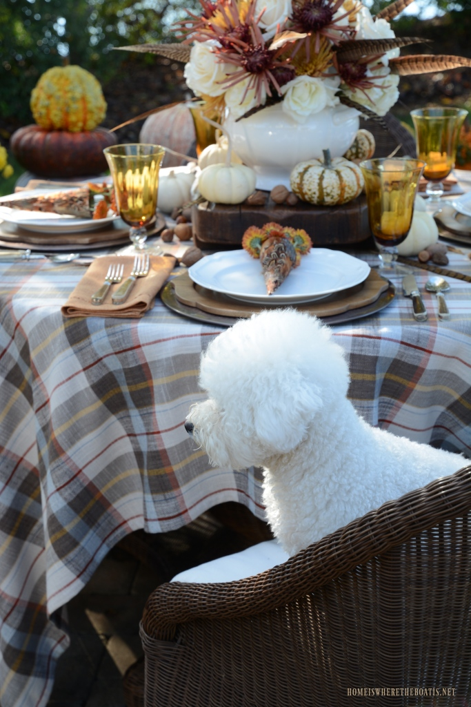 Lola sitting at the table | ©homeiswheretheboatis.net #fall #tablescape #alfresco #dog #bichonfrise