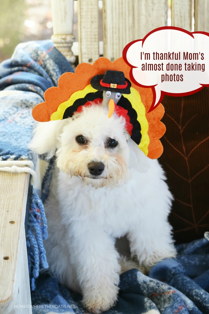 Happy Thanksgiving from Lola and Sophie | ©homeiswheretheboatis.net #dogs #thanksgiving #bichonfrise