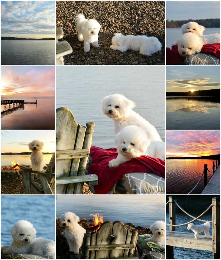 December Weekend Waterview Lake Norman | ©homeiswheretheboatis.net #lake #dogs #sunrise #sunset #bichonfrise