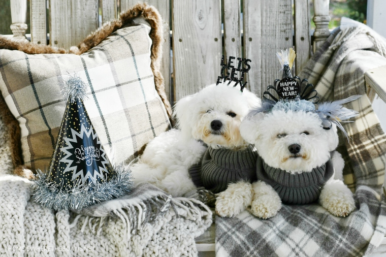 Happy New Year from Lola and Sophie | ©homeiswheretheboatis.net #dogs #newyear #bichonfrise
