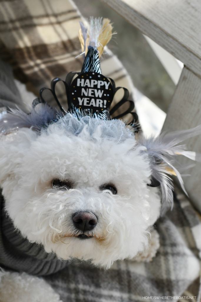 Happy New Year from Lola | ©homeiswheretheboatis.net #dogs #newyear #bichonfrise