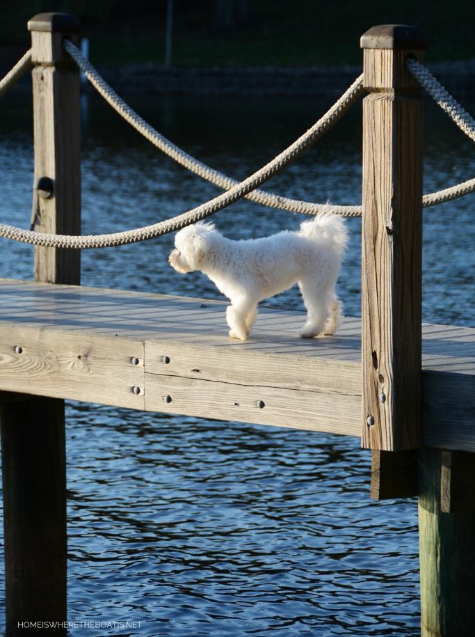 Sophie on dock   ©homeiswheretheboatis.net #LKN