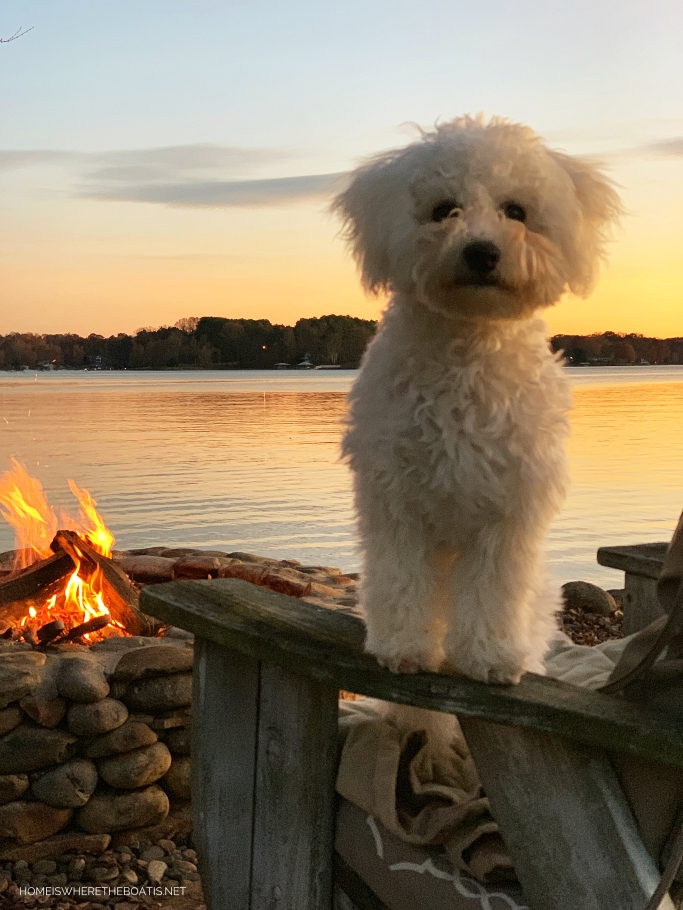 Sophie by fire pit | ©homeiswheretheboatis.net #bichonfrise #dogs #LKN
