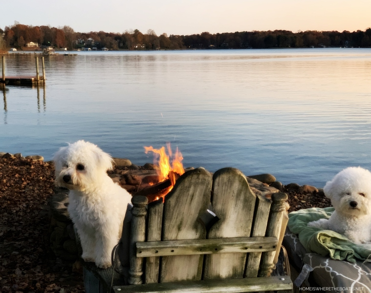 Sophie and Lola by fire pit | ©homeiswheretheboatis.net #bichonfrise #dogs #LKN