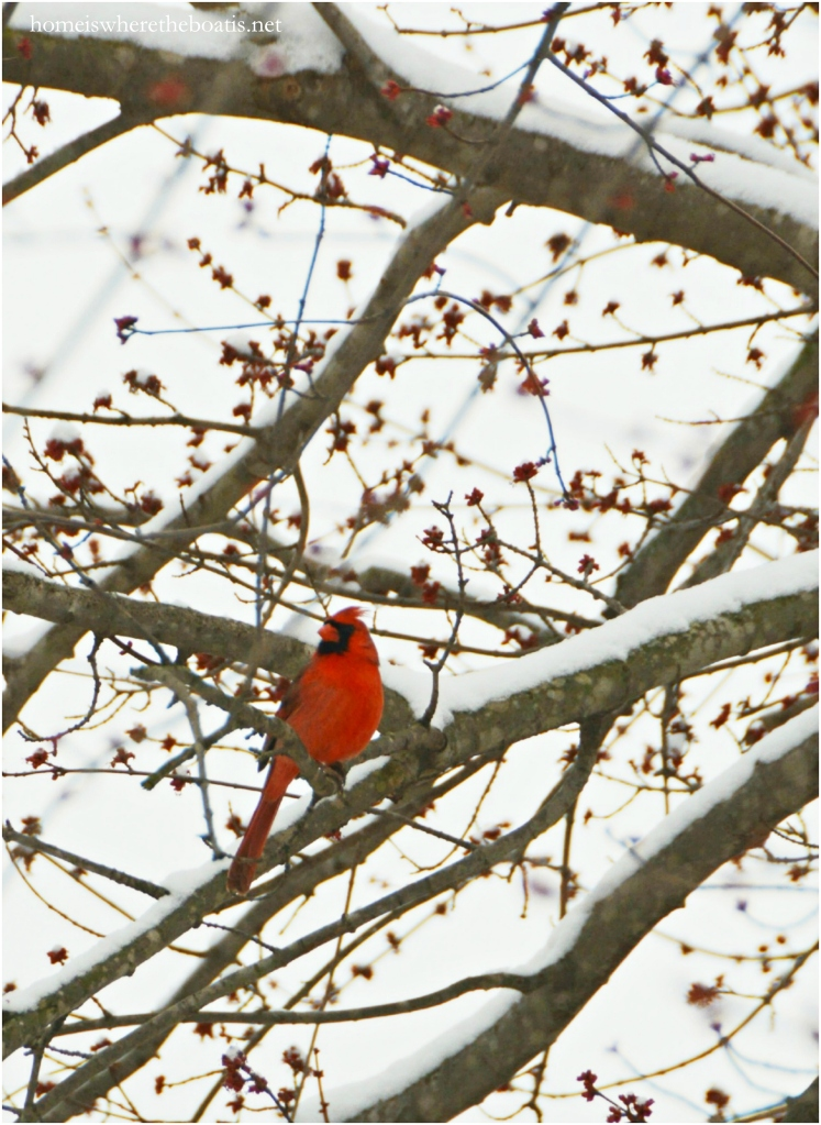 Cardinal | ©homeiswheretheboatis.net #winter #tablescapes #snow #birds