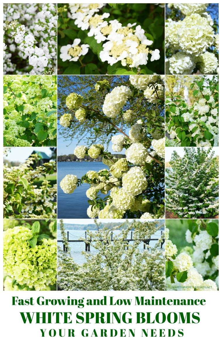 Fast Growing and Low Maintenance White Spring Blooms for Your Garden | ©homeiswheretheboatis.net #spring #flowers #lowmaintenace #fastgrowing #garden