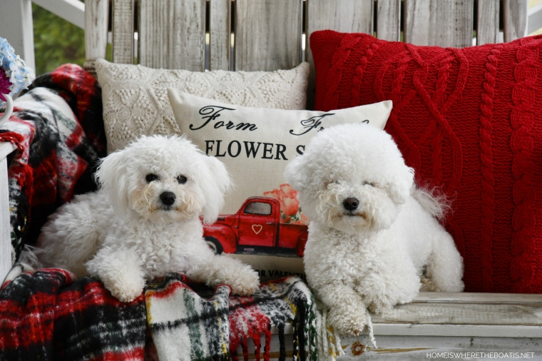 Dogs on the Porch | ©homeiswheretheboatis.net #flowers #valentinesday #dogs #bichonfrise