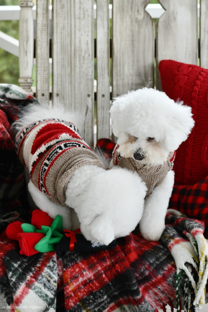 Happy Valentine's Day from Lola and Sophie   ©homeiswheretheboatis.net #valentinesday #dogs #BichonFrise