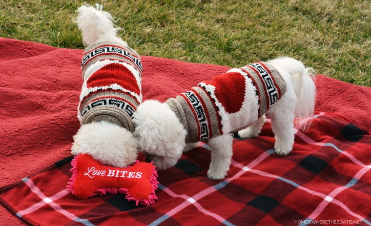 Happy Valentine's Day from Chloe and Gracie   ©homeiswheretheboatis.net #valentinesday #dogs #BichonFrise