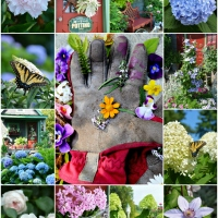 Dreaming of Spring: Flower Therapy and Garden Blooms