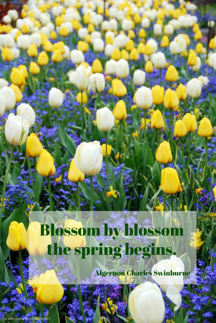 """""""Blossom by blossom the spring begins."""" - Algernon Charles Swinburne"""