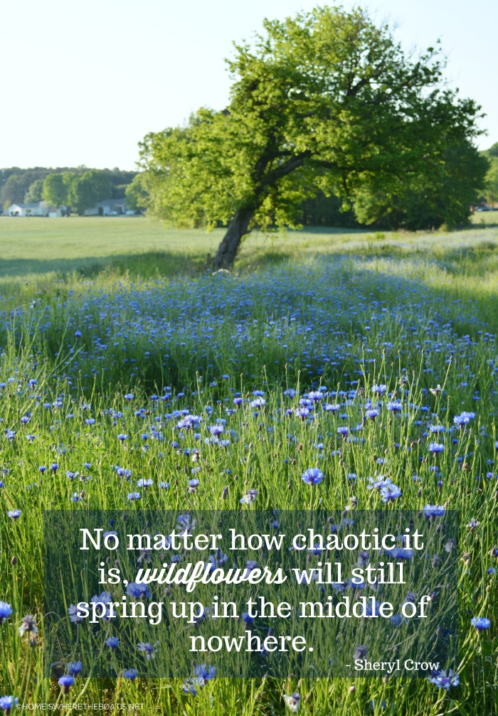"""""""No matter how chaotic it is, wildflowers will still spring up in the middle of nowhere."""" - Sheryl Crow"""