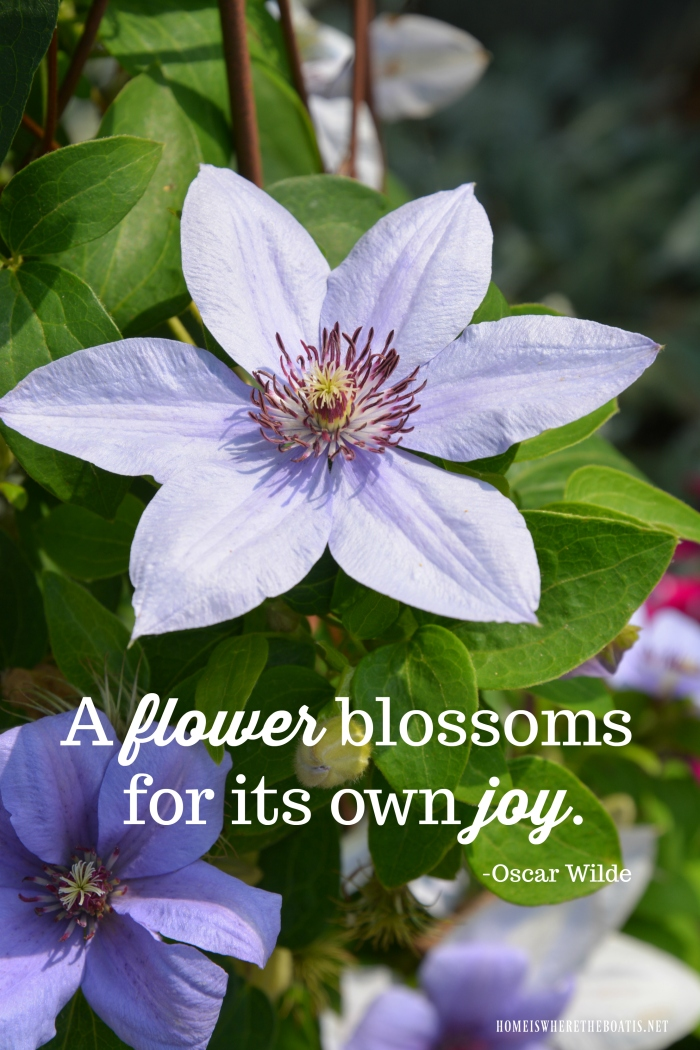"""""""A flower blossoms for its own joy."""" -Oscar Wilde"""