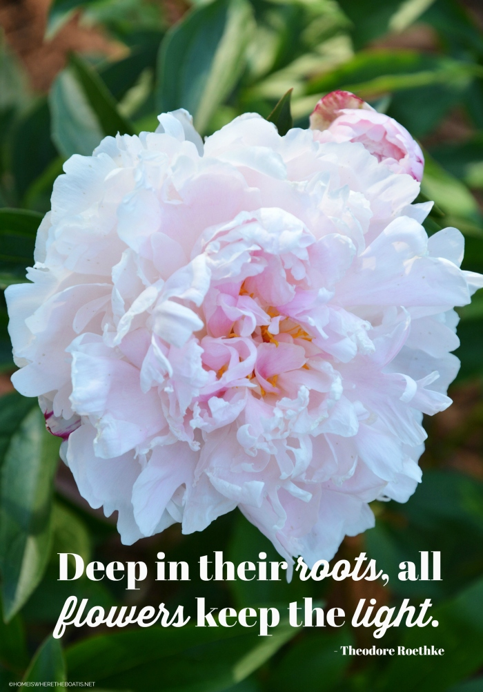 """""""Deep in their roots, all flowers keep the light."""" - Theodore Roethke"""
